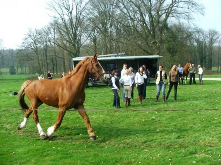 Spiegelen+met+paarden+de+Wijte+Eefde