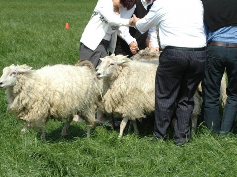 Vergaderbreak+en+Teambuilding+schapendrijven